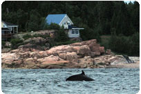 Whale-watching cruises packages
