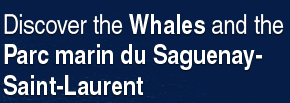Discover the Whalers and the Parc marin du Saguenay-Saint-Laurent